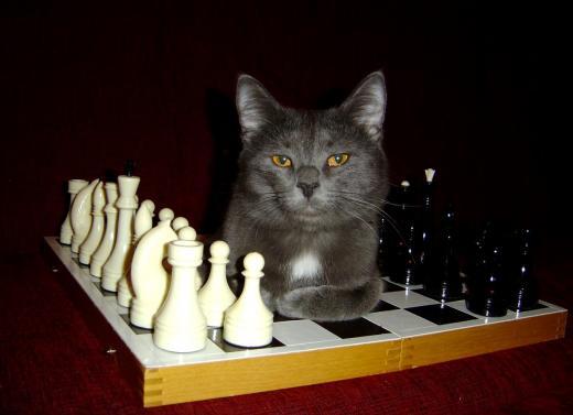 Schach macht tierischen Spaß