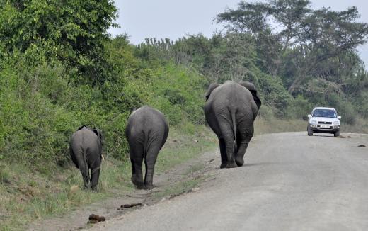 Fußgänger haben Vorfahrt (in Uganda)