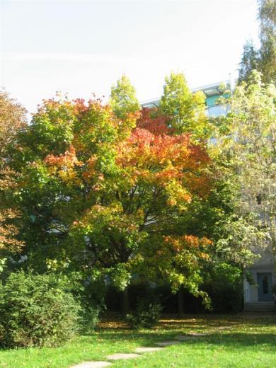 Prohliser Herbst 2012-1