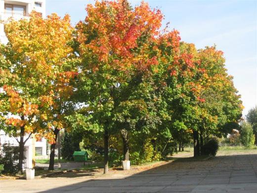 Prohliser Herbst 2012-2