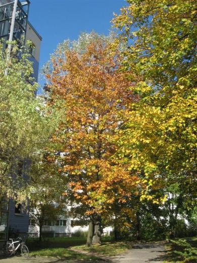 Prohliser Herbst 2012-4