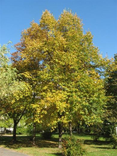 Prohliser Herbst 2012-5