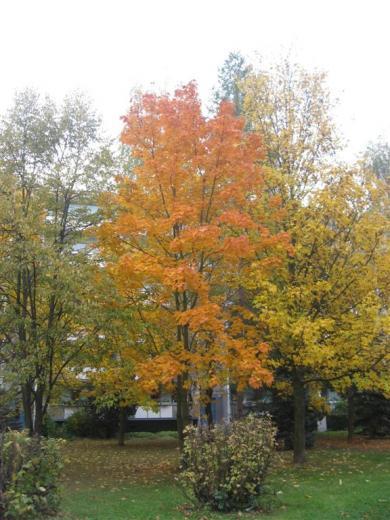 Prohliser Herbst 2012-8