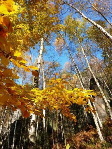 Herbst im leuchtenden Gelb