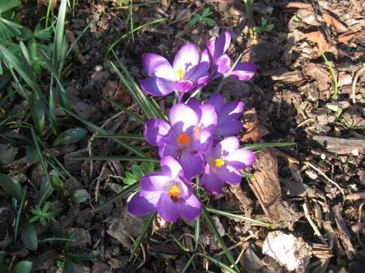 Frühlingsboten 2