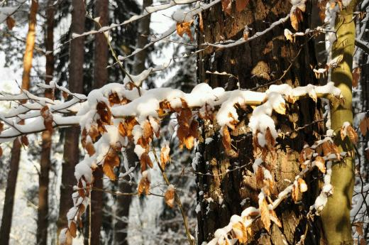 Herst und Winter