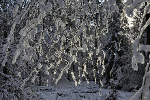 Licht im Schnee