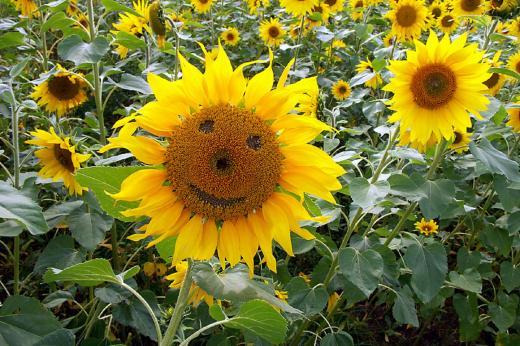Sommerlächeln
