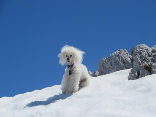 Unser Liebling in den Bergen Österreichs