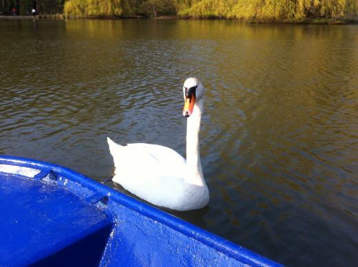 Bootsfahrt auf dem Carolasee