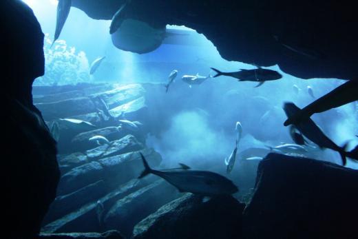 Unterwasser Zoo