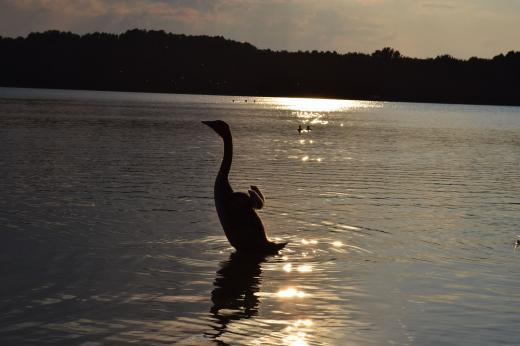 Abendlicher Blick über den See