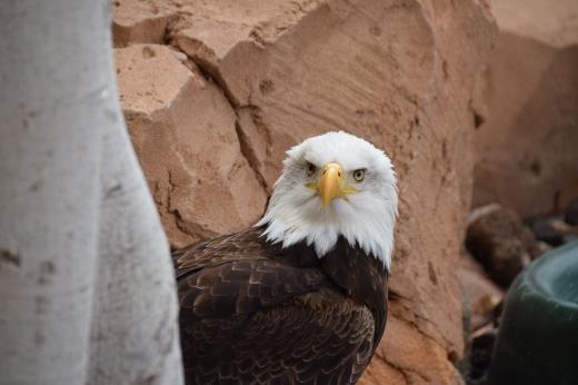Schau mir in die Adleraugen, Kleines!