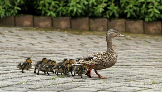 Eine neue Familie