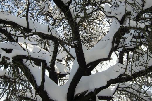 Der Ball im Baum