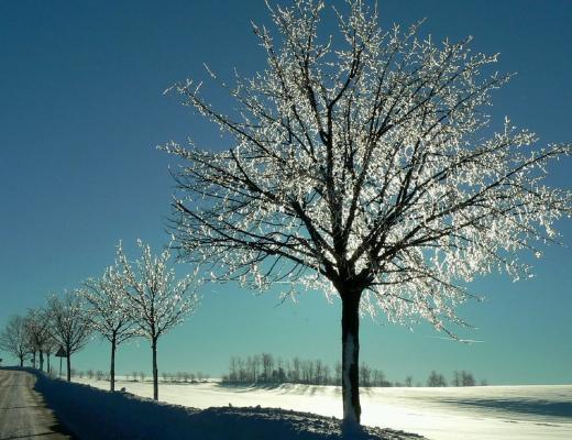 Bäume wie Kristall