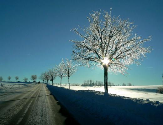 Bäume wie Kristall 2