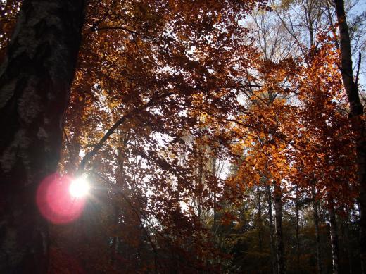 Herbstsonne 1