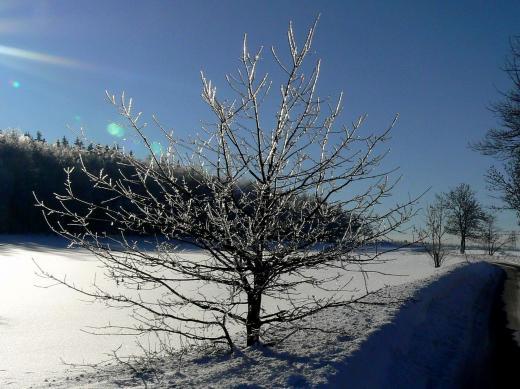 glitzernde Bäume