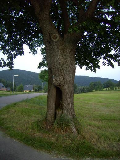 Alter Baum und neu gemähte Wiese