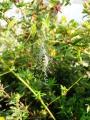 Spinne im Frühherbst